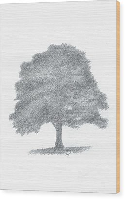 Beech Tree Drawing Number Three Wood Print by Alan Daysh