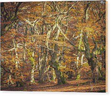 Beech Tree Group In Autumn Light Wood Print by Martin Liebermann