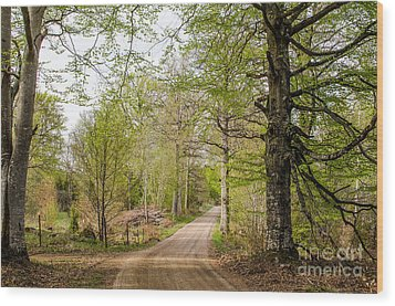 Wood Print featuring the photograph Beeches At Springtime by Kennerth and Birgitta Kullman