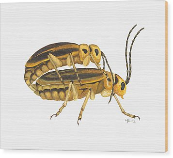 Chrysomelid Beetle Mating Pose Wood Print by Cindy Hitchcock