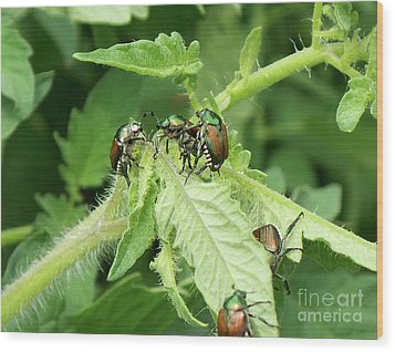 Wood Print featuring the photograph Beetle Posse by Thomas Woolworth