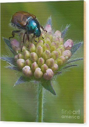 Beetle Sitting On Flower Wood Print