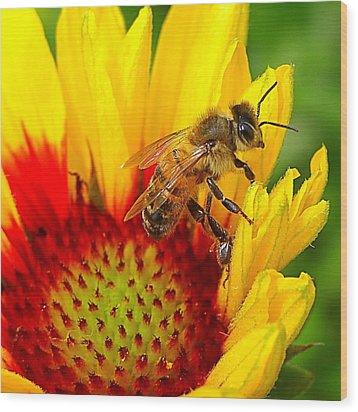 Beezy Bee Wood Print