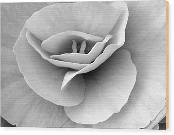 Begonia Wood Print by Angela Bruno