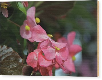 Begonia Beauty Wood Print