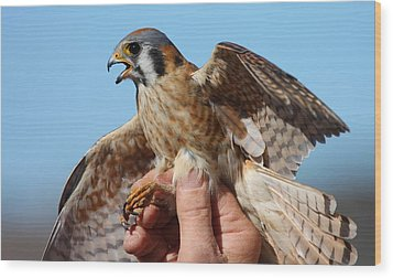Behold The American Kestrel Wood Print by Nathan Rupert