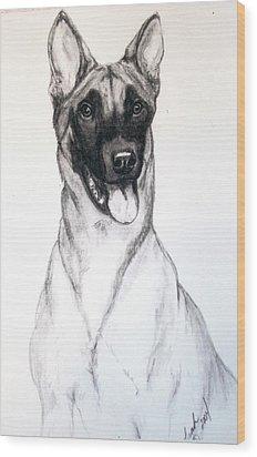 Belgian Malinois Wood Print by Lorah Buchanan