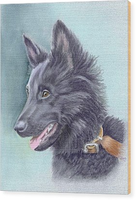 Belgian Sheepdog Puppy Wood Print by Ruth Seal