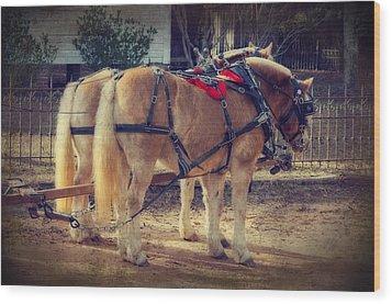 Belgium Draft Horses Wood Print
