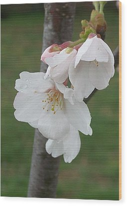 Bell Blossoms Wood Print by Wide Awake Arts
