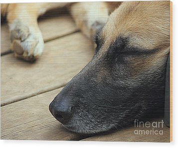 Wood Print featuring the photograph Bella by Lisa L Silva