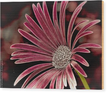 Belle Of The Ball Wood Print by Wallaroo Images