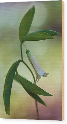 Bellwort - Spring 2013 Wood Print by Thomas J Martin