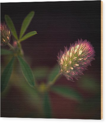 Below The Flower Line Wood Print by Bob Orsillo