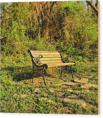 Bench At The Pond  Wood Print by Andrew Martin