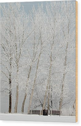 Benches And Hoar Frost Trees Wood Print by Rob Huntley