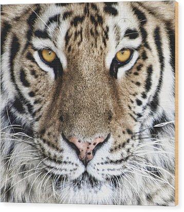 Bengal Tiger Eyes Wood Print by Tom Mc Nemar