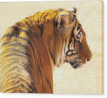 Bengal Tiger In Thought Wood Print by JAXINE Cummins