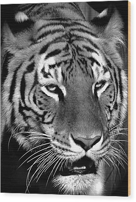 Bengal Tiger In Black And White Wood Print by Venetia Featherstone-Witty