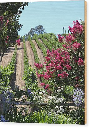 Benziger Winery In The Sonoma California Wine Country 5d24495 Vertical Wood Print by Wingsdomain Art and Photography