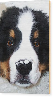 Bernese Mountain Dog - Baby It's Cold Outside Wood Print by Sharon Cummings