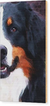 Bernese Mountain Dog - Half Face Wood Print by Sharon Cummings