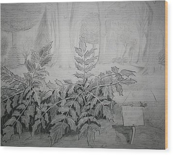 Wood Print featuring the drawing Bernheim Forest Plant by Stacy C Bottoms