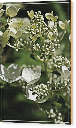 Berries And Blooms In Monochromatic Green Wood Print by Jp Grace
