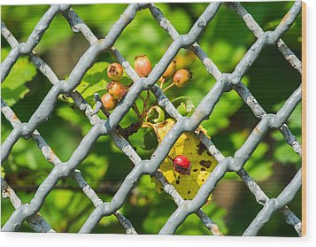 Berries And The City - Featured 3 Wood Print by Alexander Senin
