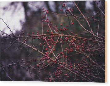 Berries  Wood Print by Heather L Wright