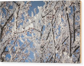 Wood Print featuring the photograph Berries With Frost by Kari Yearous