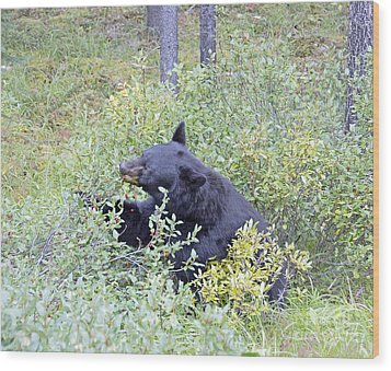 Wood Print featuring the photograph Berry Bear by Wanda Krack