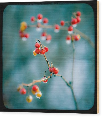 Berry Nice - Red Berries - Winter Frost Icy Red Berries - Gary Heller Wood Print by Gary Heller