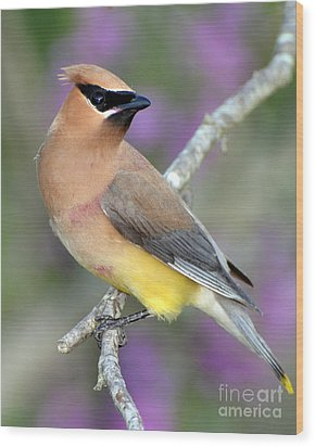 Berry Stained Waxwing Wood Print