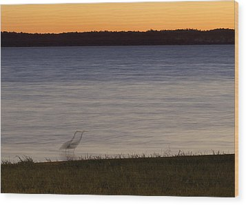 Beside Myself - Great Blue Heron At Sunset Wood Print by Jane Eleanor Nicholas