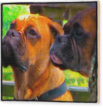 Best Friends Dog Photograph Wood Print by Laura Carter