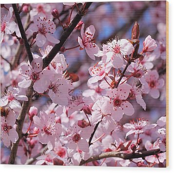 Bevy Of Blossoms Wood Print