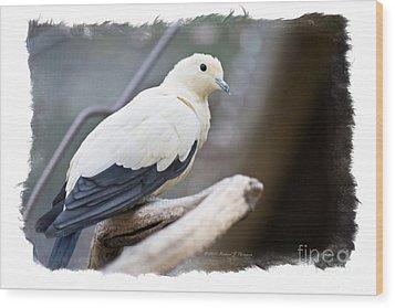 Bicolor Pigeon Wood Print
