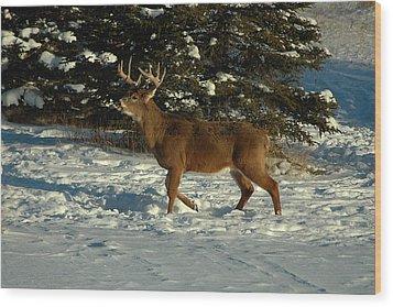 Big Boy In Early Winter Wood Print by Sandra Updyke