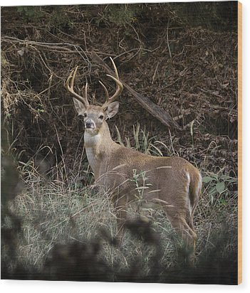 Wood Print featuring the photograph Big Buck by John Johnson