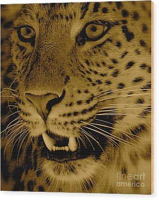 Big Cat In Sepia Wood Print by Louise Fahy