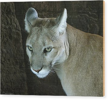 Wood Print featuring the photograph Big Cat by Rhonda McDougall