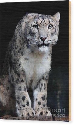 Big Cat's 2011.no.3 Wood Print by RL Clough