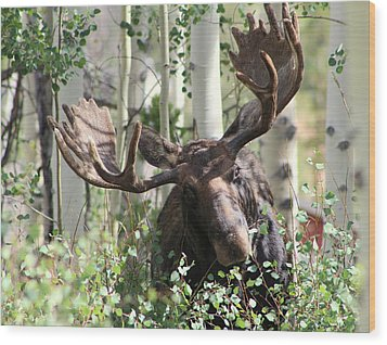 Big Daddy The Moose 3 Wood Print by Fiona Kennard