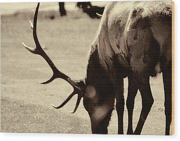 Big Elk In Sepia Wood Print