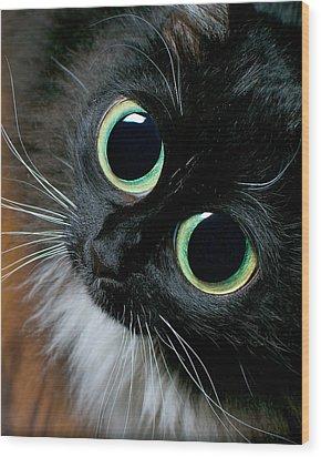 Big Eyed Cat Begging Portrait Wood Print by Berkehaus Photography