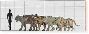 Big Felines Size Chart Wood Print by Vitor Silva