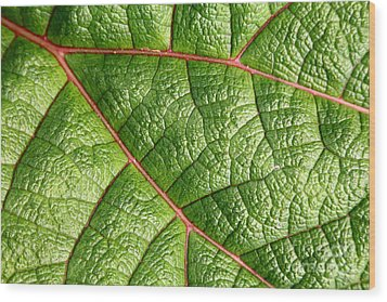 Big Green Leaf 5d22460 Wood Print by Wingsdomain Art and Photography