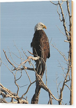 Big Horn Bald Eagle Wood Print