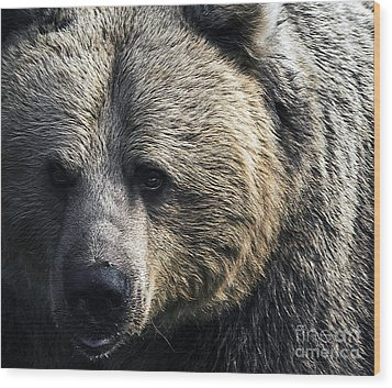 Bigger Than The Average Bear Wood Print by Rick Bransby